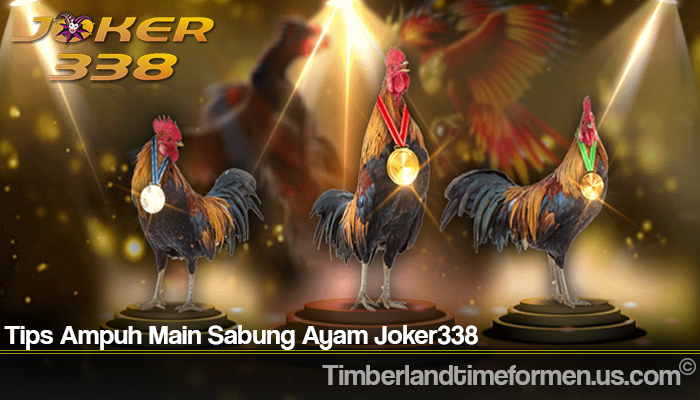 Tips Ampuh Main Sabung Ayam Joker338